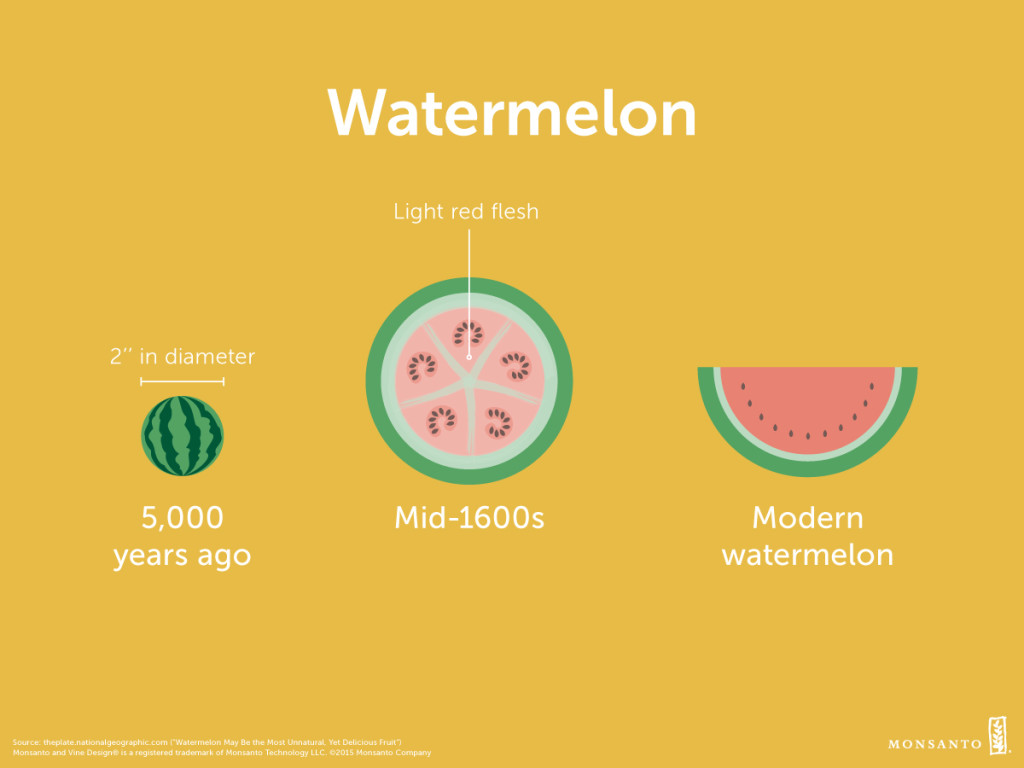 Ancestor_Appreciation_Day_v2_PM_Watermelon_Facebook_or_Instagram