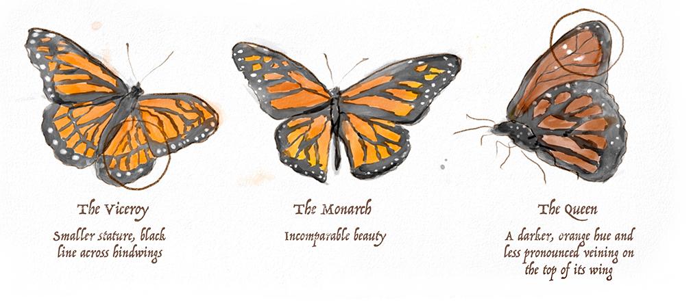 ButterflyComparisonDesktop