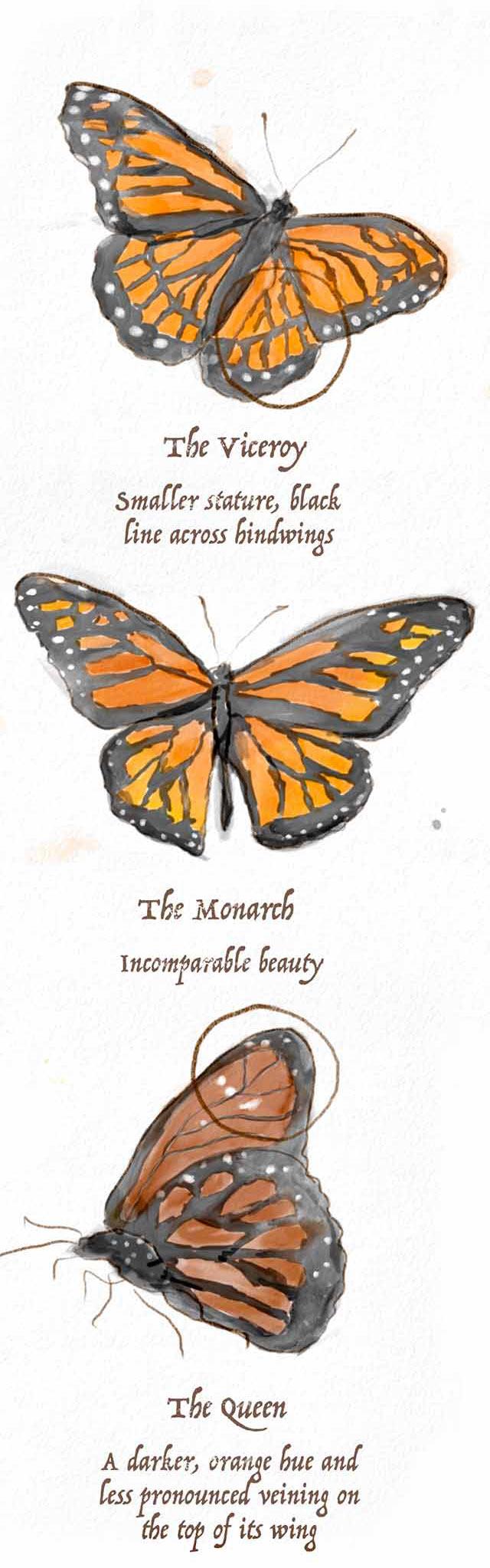 ButterflyComparisonMobile