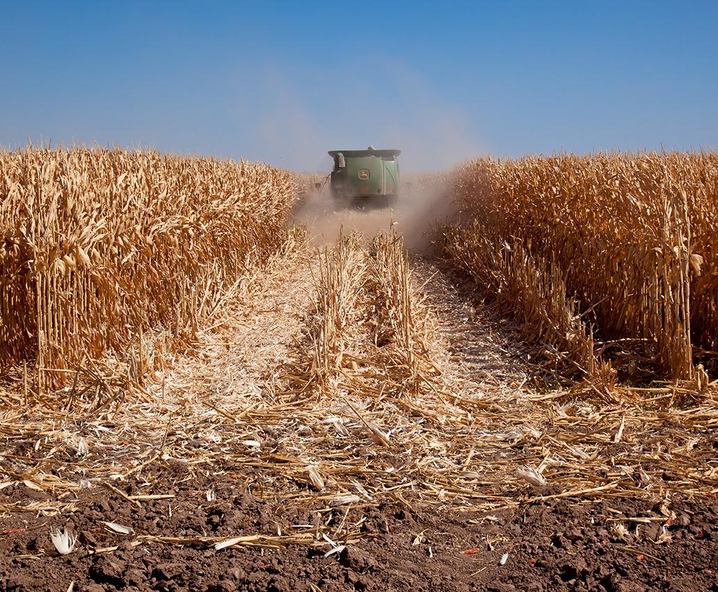 Corn_RC_OPF_General_CombineInFieldHarvest_001