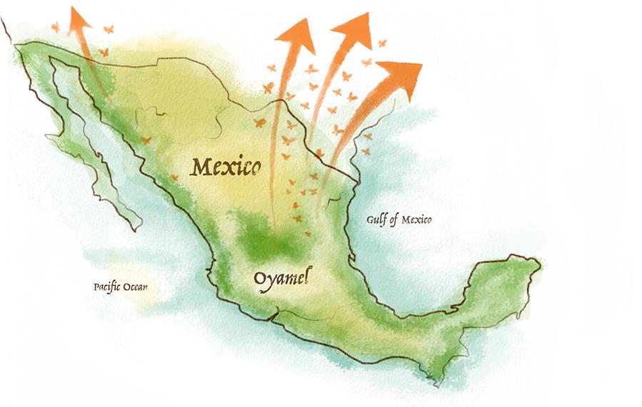 MexicoMigration_Desktop