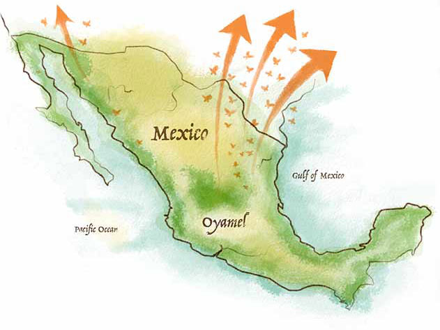 MexicoMigration_Mobile