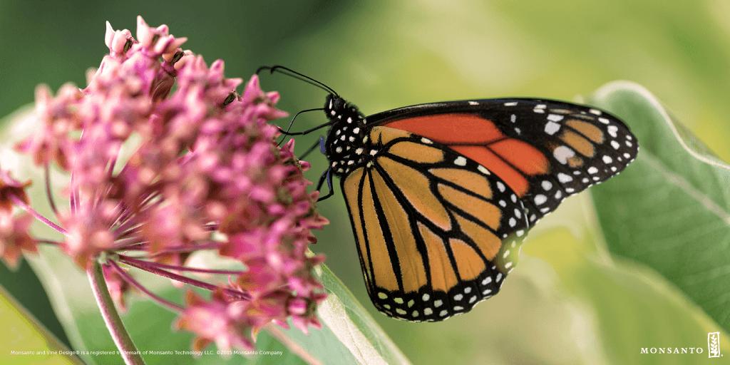 Monarch_graphics_v7_PM_Twitter_Monarch