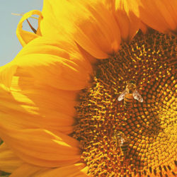 Let's Protect Our Pollinators