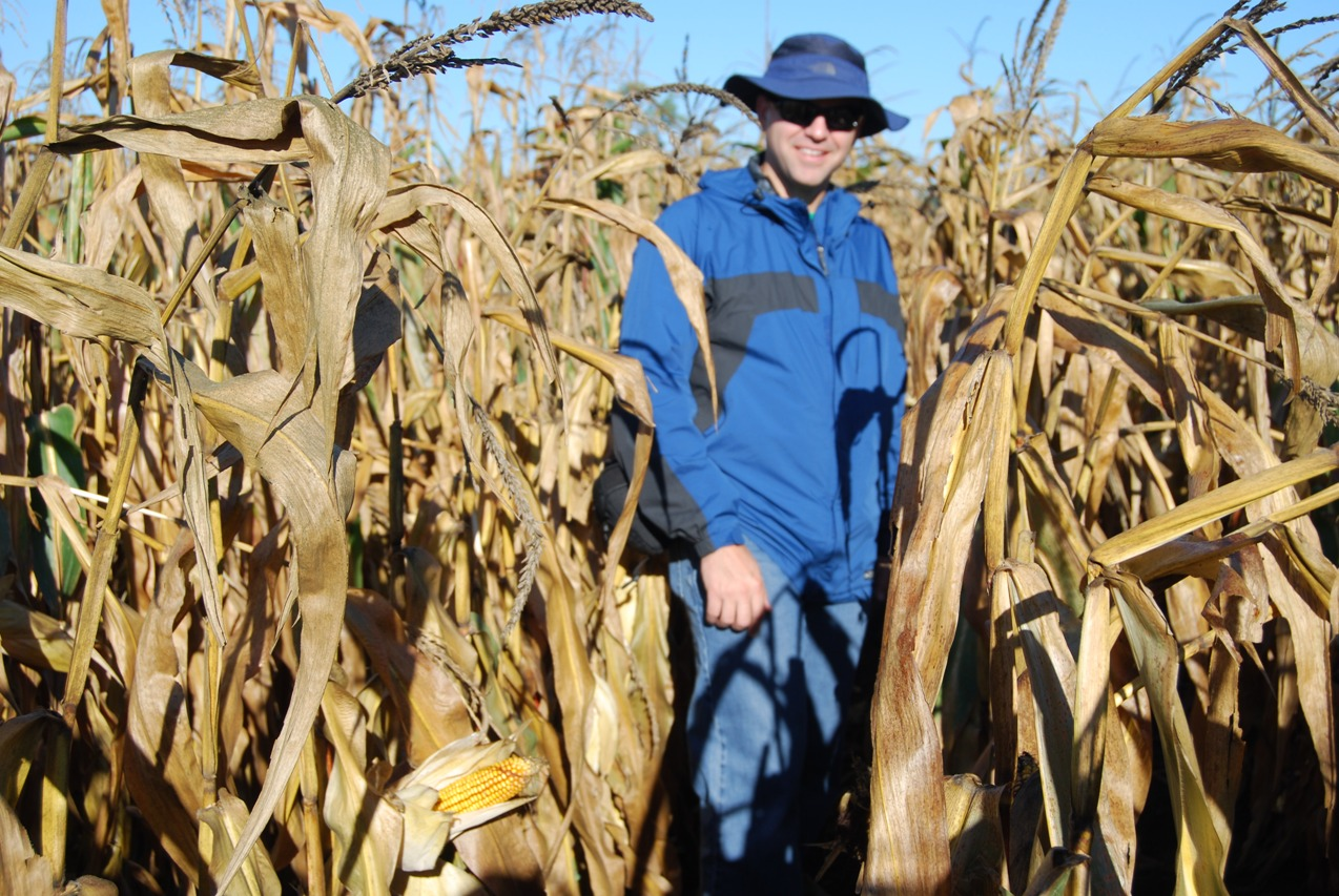 Sam Eathington checks on a corn crop nearing harvest. Sam has been a breeder for more than 20 years at Monsanto.