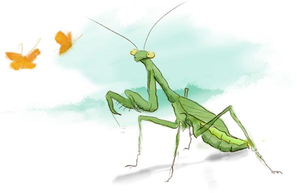 Praying mantis eyes two distant monarchs