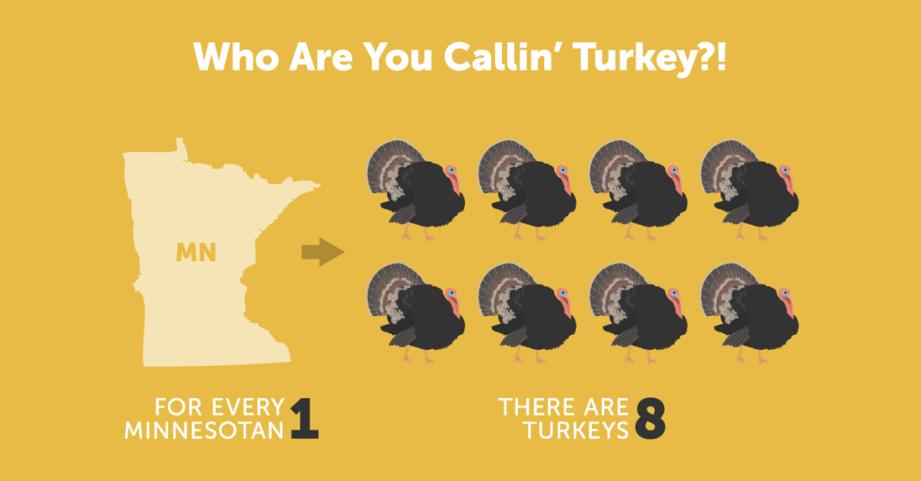 Fun Turkey Facts | Discover Monsanto