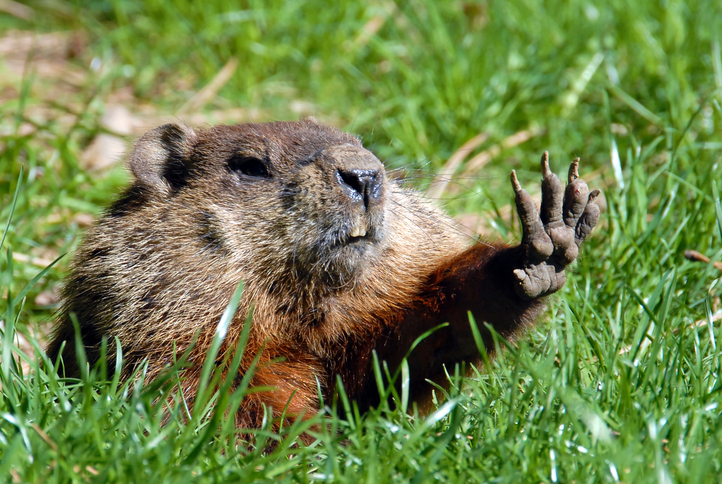 Give me five shows Groundhog