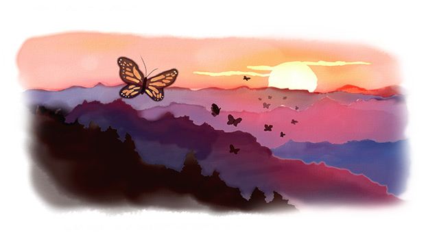 Monarchs migrate to Oyamel forest during sunset